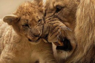 A King's Love