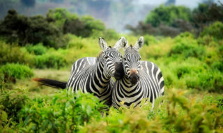 Affectionate Wildlife